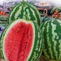 Vattenmelon Crimson Sweet-Frö till vattenmelon - Crimson Sweet