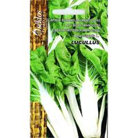 Mangold Lucullus-Frö till Mangold - Lucullus