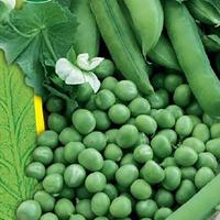 Ärtor, Progress n.9-Fröer till ärtor peas, progress n9