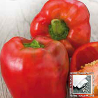 Paprika, Yolo Wonder-Fröer till paprika pepper sweeet, yolo wonder