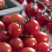 Tomat, Charmant-Fröer till tomat tomato, charmant