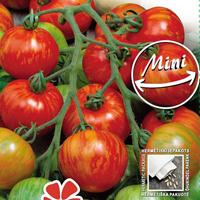 Tomat, Duo-Fröer till tomat tomato, duo