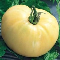 Tomat, White Beauty-Fröer till tomat tomato, white beauty