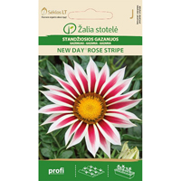 Gazania New Day & Rose Stripe,