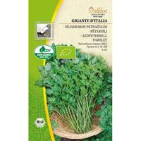 Persilja slätbladig organic, Gigante d'Italia-Frö till Persilja slätbladig organic - Gigante d'Italia