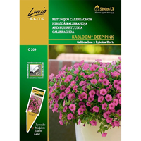 Petunia Kabloom Deep Pink,