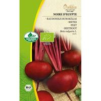 Rödbeta Organic Noire d'Egypte-Frö till Rödbeta Organic - Noire d'Egypte