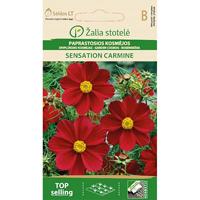 Rosenskära Garden Sensation Carmine,