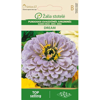 Zinnia Dream,