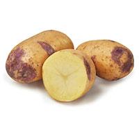 Blue Belle, sättpotatis-Sättpotatis till medeltidig potatis Blue Belle