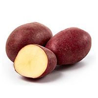 Bordeaux, sättpotatis-Sättpotatis till medeltidig potatis Bordeaux