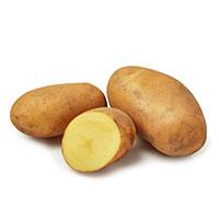 Gwenne, sättpotatis-Sättpotatis till tidig potatis Gwenne