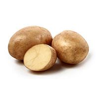 Minerva, sättpotatis, Sättpotatis till mycket tidig potatis Minerva