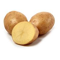 Princess, sättpotatis-Sättpotatis till medeltidig potatis Princess