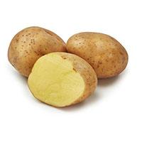 Timo, sättpotatis-Sättpotatis till myckt tidig potatis Timo
