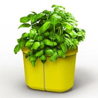 Genie Kitchen Garden - Citrongul-Genie Kitchen Garden underbevattning