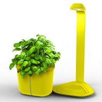 Genie Kitchen Garden Set - Citrongul,