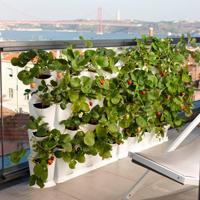 Minigarden Vertical - Växtvägg, svart,