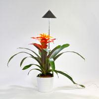 Växtlampa med teleskopstativ för krukväxter inne.