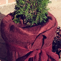 Frostskyddsmatta jutefilt, blackberry-Frostkyddsmatta vinterskydd