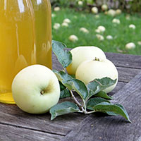 Ympris till äpple 'Transparente Blanche'