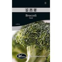 Frö för odling av Broccoli - Cezar