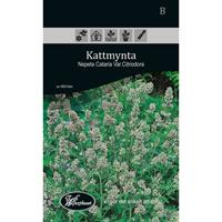 Frö för odling av Kattmynta