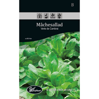 Frö för odling av Machesallad - Verte de Cambrai
