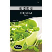 Frö för odling av Mikroblad - Solros