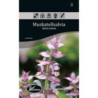 Frö för odling av Muskatellsalvia