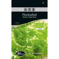 Frö för odling av ekologisk Plocksallad - Bionda a Foglia Riccia