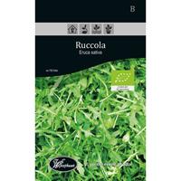Frö för odling av ekologisk Ruccola