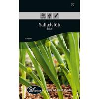 Frö för odling av Salladslök - Bajkal