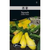 Frö för odling av Squash - Goldena Yellow