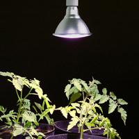 Plant Light Primula Grow, vit 10W, Växtbelysning för inomhusodling av växter