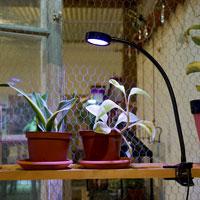 Orion, växtlampa för inomhusodling