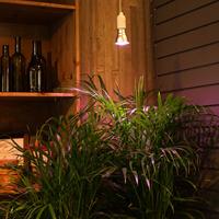 Plant Light Primula Indoor, koppar 10W, Stödbelysning för inomhusväxter