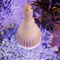 Växtlampa Multiflora 30 watt-Växtlampa Multiflora för inomhusodling