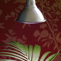 Plant Light Primula Indoor, koppar 10W, Extrabelysning för prydnadsväxter