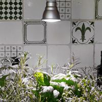 Plant Light Primula Grow, vit 10W, Växtlampa för odling av kryddväxter