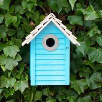 New England fågelholk, Blue, Fågelhus för småfåglar
