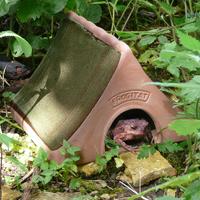 Grodhus - Frogitat Frog & Toad home-Grodhus/paddhus - bo och övervintring