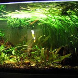 Algstopp 'Akvarium'-Biologisk bekämpning av alger