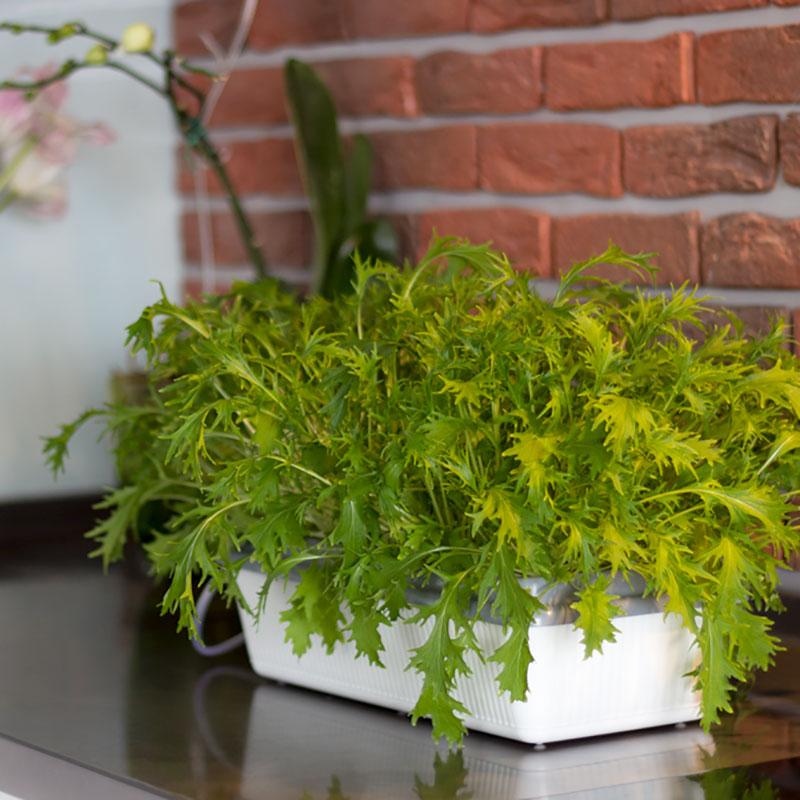Skördis är ett hydroponiskt odlingssystem för inomhusodling av ätbara växter