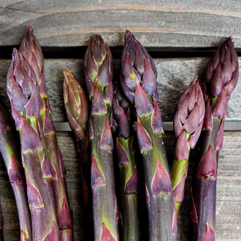 Plantor till violett sparris