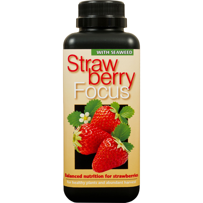 Strawberry Focus, 500ml, Strawberry Focus 500ml specialnäring för jordgubbar i kruka
