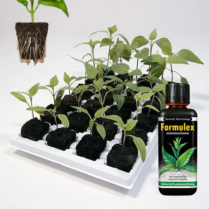 odlingspaket rotningskuber Root Riot och näring Formulex