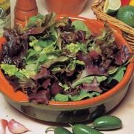 Sallad LETTUCE Mixed Salad Leaves, Frö till Sallad