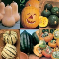 Pumpa PUMPKIN & WINTER SQUASH COLLECTION, Frö till Pumpa