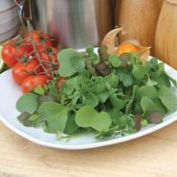 Sallad SP MIXED LEAVES Gourmet Garnish (Micro-Greens), Frö till Sallad